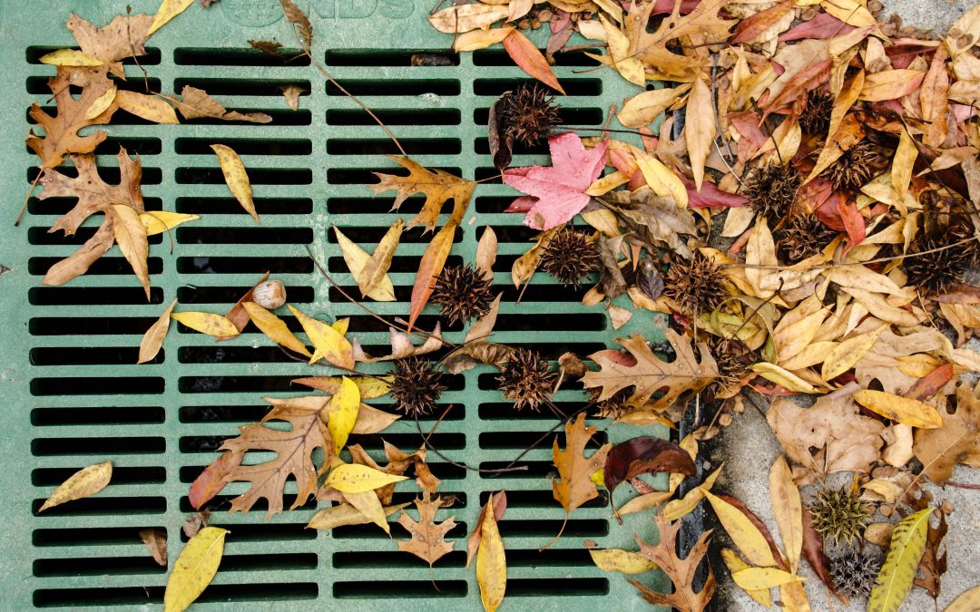 Quick & Easy Ways to Stop Fall Leaves from Clogging Drain
