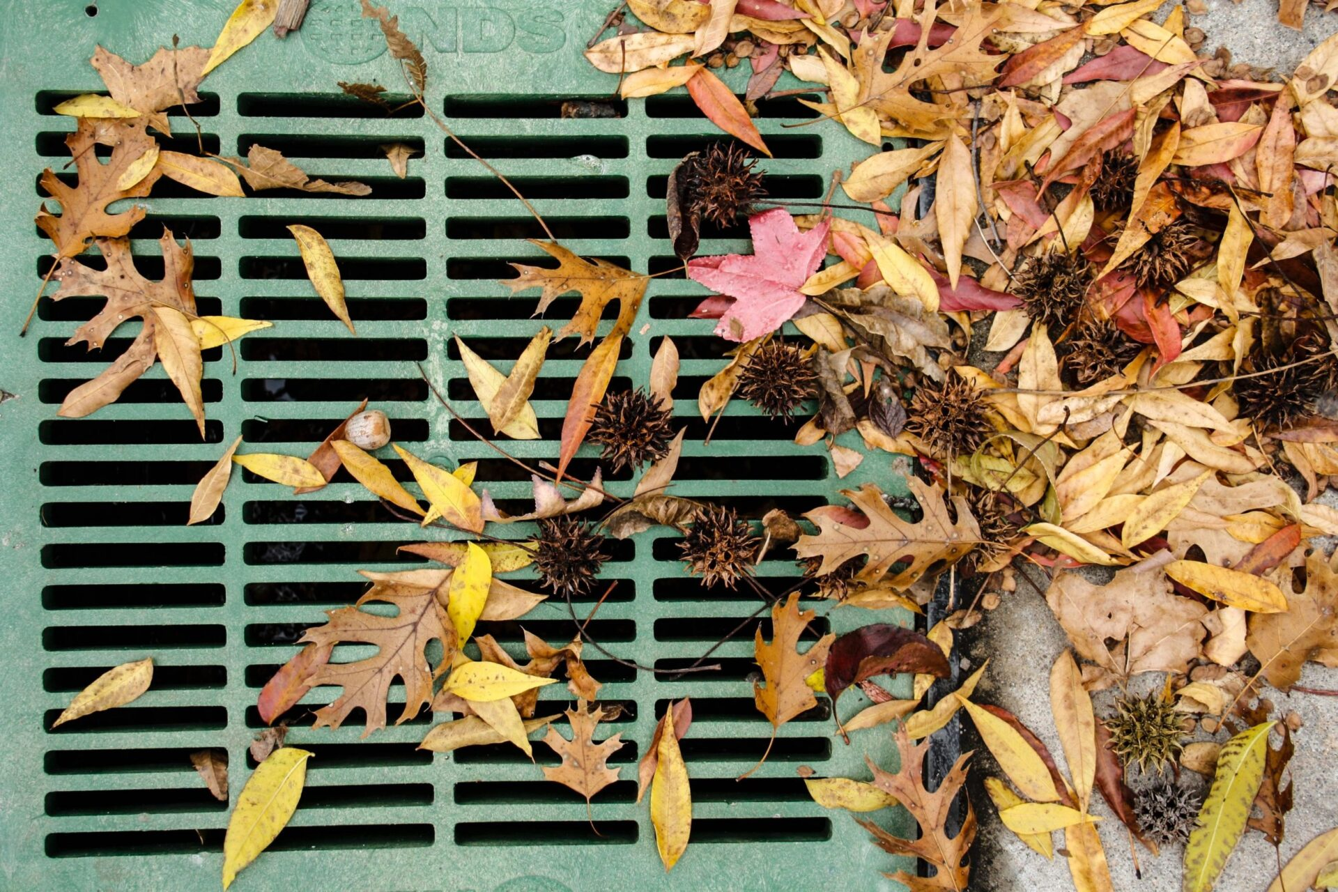 Cleaning Fall leaves to prevent your drainage system from blockages